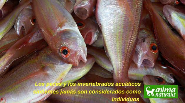 los peces también sienten