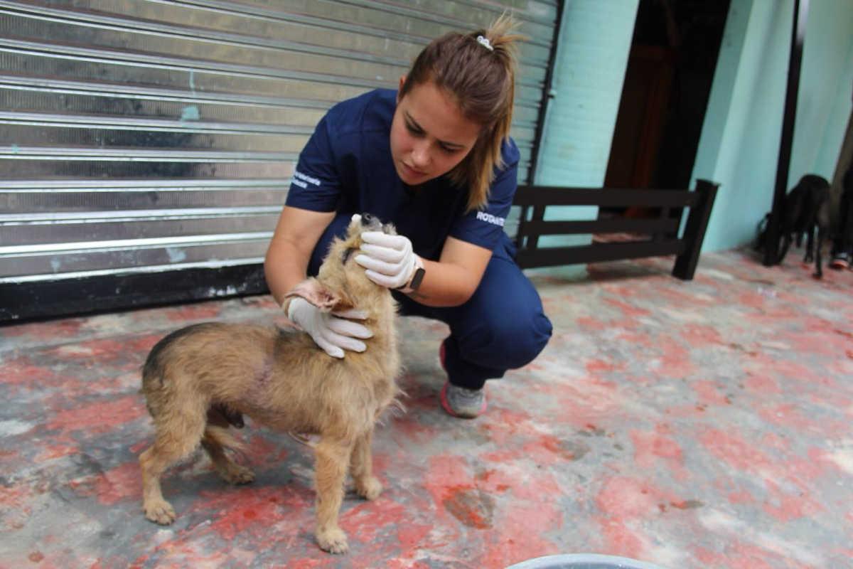 Animales de familias evacuadas